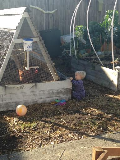 Gotta keep up with this little homesteader!