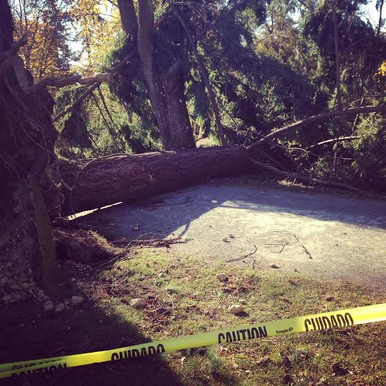 Over coming obstacles, folks!  Our park lost two huge trees in last nights windpocolypse 2014.
